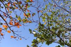 植物叶子在秋天 免版税图库摄影