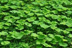 从植物名植物的沼地背景的 免版税库存照片