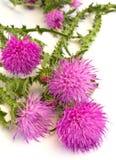 植物名 免版税库存图片