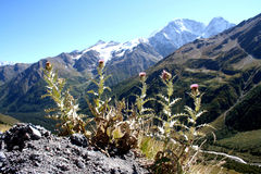 植物名 免版税图库摄影