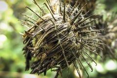 植物名blurr在秋天 库存照片