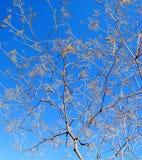 植物和天空 库存图片