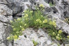 植物和岩石在Cobijeru海滩, Austurias 免版税图库摄影
