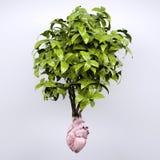植物和心脏器官作为根 库存图片