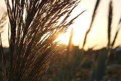 植物和日落 库存照片