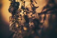 植物和日落 免版税库存照片