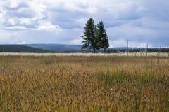 植物和植被与树和多云天空 免版税库存图片