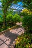 植物和灌木在霍华德彼得斯Rawlings音乐学院里面 免版税库存图片