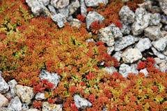 植物和石头 库存图片