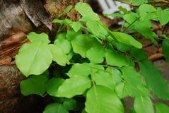 植物和自然在森林里 库存图片