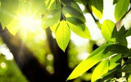 植物和自然绿色环境与阳光 免版税库存照片