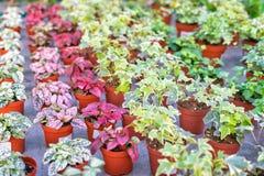 植物和花商店卖的在植物托儿所 库存照片