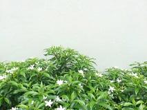 植物和花在墙壁 免版税库存图片