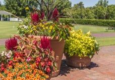 植物和花的五颜六色的安排 免版税库存图片