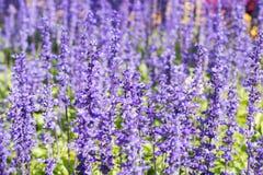 植物和花 免版税库存图片