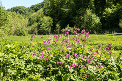植物和草甸 库存图片