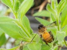 植物和蜂 库存图片