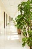植物和走廊 库存图片