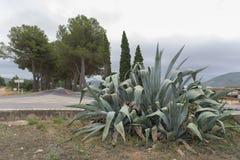 植物和路 免版税库存图片