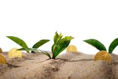 植物和金钱。 免版税库存照片