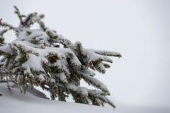 植物和雪 免版税库存图片