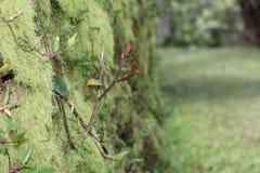 植物和青苔 免版税库存照片