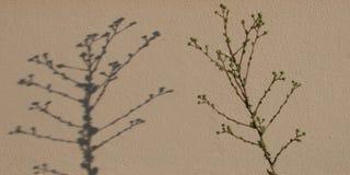 植物和阴影 库存照片