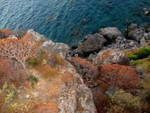 植物喜欢珊瑚,由海的岩石 库存照片