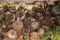 植物园在克拉科夫,波兰 免版税库存图片