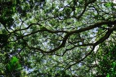 植物园在毛里求斯 图库摄影