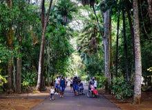 植物园在毛里求斯 免版税库存照片