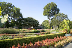 植物园在达拉斯 免版税库存图片