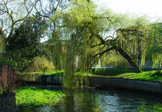 植物园在都伯林 免版税库存图片