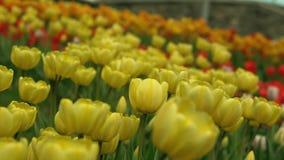 植物园春天 股票录像
