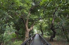 植物园木板走道足迹台北台湾 库存图片