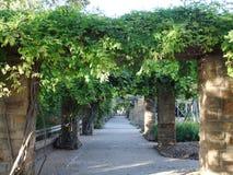 植物园树荫处 库存照片