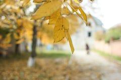 植物园树  免版税图库摄影