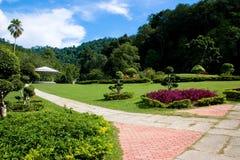 植物园槟榔岛 库存图片