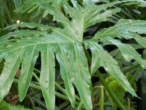 植物园热带绿色叶子 免版税库存图片