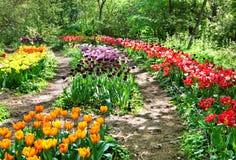 植物园莫斯科郁金香 免版税图库摄影