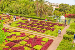 植物园雅尔丁Botanico,马德拉岛 库存图片