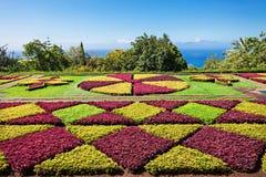 植物园马德拉岛 免版税库存图片