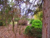 植物园, Kamenets Podolskiy,乌克兰 免版税库存图片