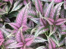 植物园紫色和绿色植物 免版税库存图片