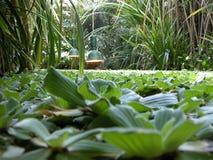 植物园 免版税图库摄影