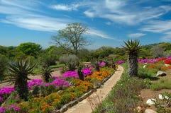 植物园kirstenbosch国民 免版税库存照片