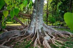 植物园Pamplemousses,毛里求斯 免版税库存图片