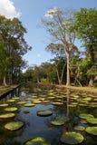 植物园pamplemousses 免版税库存照片