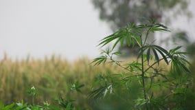 植物图片 库存照片