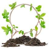 植物圈子 库存图片